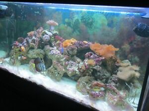 "48"" Reef Tank, Oceanic Fluorescent light and stand"