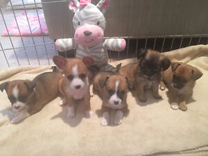 Beautiful puppies for sale!