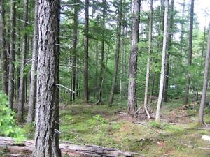 5.5+ acres for sale Revelstoke British Columbia image 6