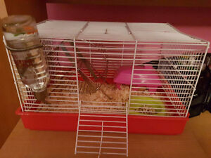Hamster avec cage