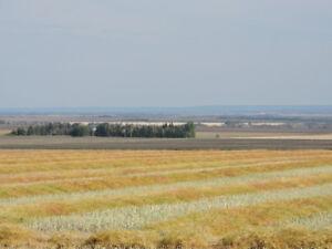 Investment in Prime Farmland