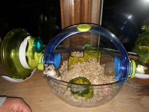 Hamster femelle avec cage