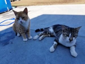 One year old cats...must go as pair