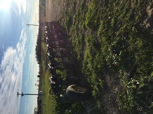 John Deere 2800 Plow Sarnia Sarnia Area image 3