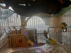 2 Beautiful Budgies looking for a good home.