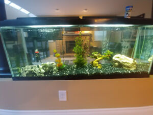 55 gallon Fish Tank, supplies, and 2 algae eaters