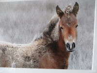 Frozen horse picture $ or trade  Amazing photo for the horse lov