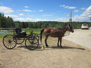Democrat Buggy/Horse Single Horse Carriage