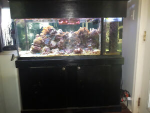 75 Gallon Saltwater Aquarium With Sump, Pump, Stand, & More