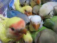 EXOTIC PETS *** NEW ARRIVALS BABY BIRDS & REPTILES!!!!!!!!!!!!!!