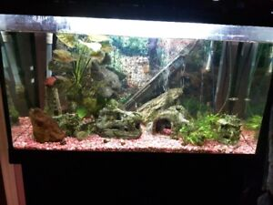 Aquarium et poissons à vendre