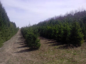 Tree Line/Windbreak Planting