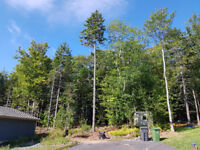 Safe Tree Removal  - Trimming  - Fall Specials