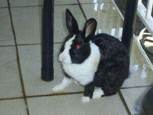 free bunny and budgies