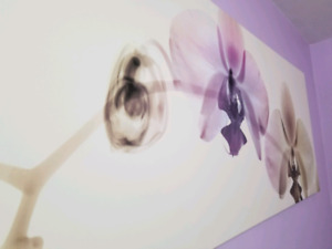 Orchid Picture Canvas