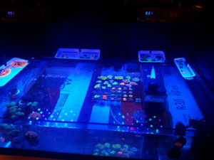 Saltwater coral reef frags and colonies
