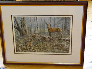 Paul Rankin Mother's Guidance Deer Print (Bancroft Area)