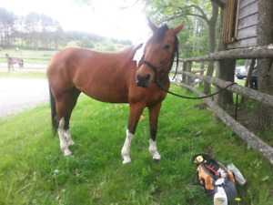Mare for full lease