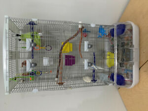 White and blue Budgie and cage