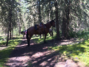 Horse Training, Riding Lessons and More!