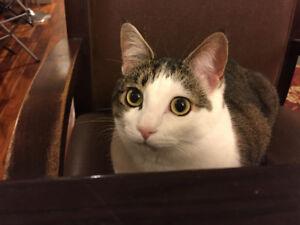 Lost Cat! Montgomery Area