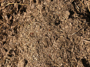 Make your garden happy! Free horse manure.