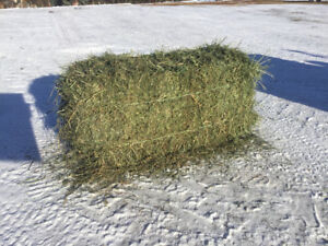 SECOND CUT SMALL SQUARE BALES