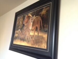 Lion photo and frame and lion picture