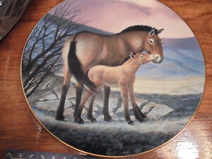 Collectors Plate Przewalski Horse 1991 Peterborough Peterborough Area image 1
