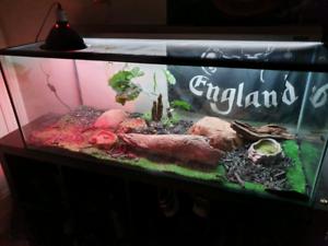 2 Blue tongue lizard/skink and reptile tank