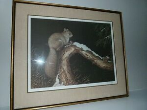 Christine Marshall Artist Proof of Grey Squirrel