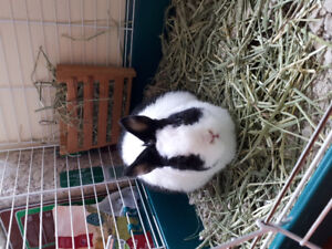 Bunny up for adoption to a loving home