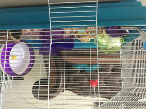 Hamster with cage and all accessories