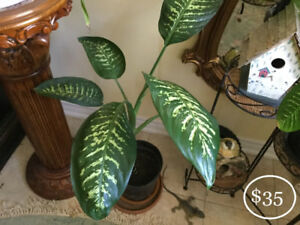 BEAUTIFUL INDOOR LEAFY LARGE & SMALL PLANTS