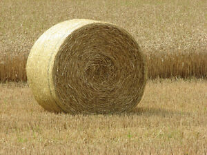 Looking to purchase Hay
