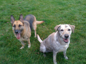 DogMother's Farm: In-home Dog Boarding & Daycare