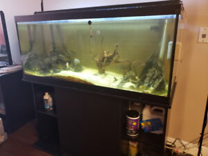 Aquarium with equipment and fish for sale