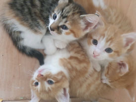 5 beautiful kittens ready for a new home