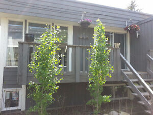2 bedroom condo in okotoks with private backyard
