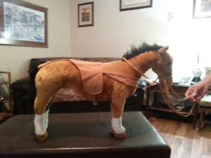 ANYBODY KNOW HOW OLD  HORSE IS