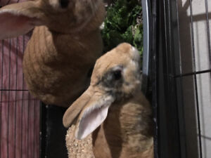 Rehoming two bunnies