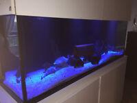 aquarium 180g tout equipe