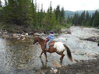 Excellent Kid's Trail Horse