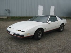 1987 Firebird in strathmore
