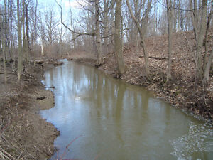 Wooded Property with Ravine and Stream