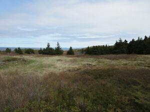Madrock Rd - Bay Roberts, NL - MLS 1134925 St. John's Newfoundland image 5