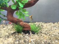 MUST SELL - Moving and need to re-home fish and tank mates