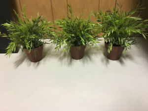 3 artificial indoor plants
