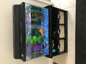 75 Ltrs aquarium with fish and complete accessories.
