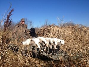 Guided Duck and Goose Hunts Cornwall Ontario image 6